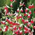 Plant Sales Winthrop